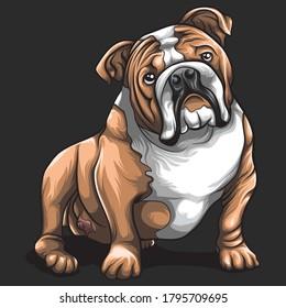 Bulldog cute concept cartoon vector design
