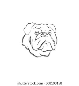 Bulldog face outlined on a white background