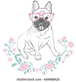 bulldog with glasses, vector illustration