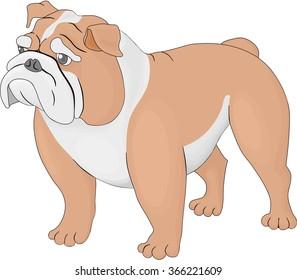 Bulldog on a white background