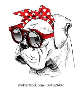 Bulldog portrait in a red headband with sunglasses. Vector illustration.