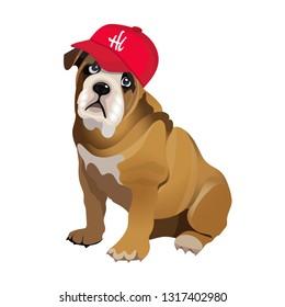 Bulldog-baseball Images, Stock Photos & Vectors | Shutterstock