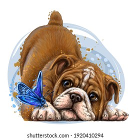 Bulldog. Wall sticker. Color,  drawing portrait of a bulldog puppy with a butterfly in watercolor style on a white background. Separate layer. Digital vector drawing