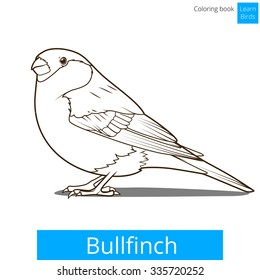Bullfinch Learn Birds Educational Game Coloring Book Vector Illustration