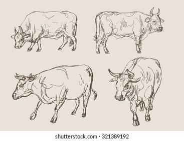 bulls vector, hand draw sketch