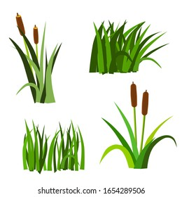 Bulrushes, elements leaves and fruits vector illustration on a white isolated background in green