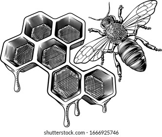A bumble bee or bumblebee and a honeycomb dripping with comb honey in a vintage woodcut retro style