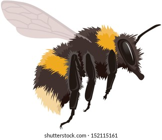 Bumble bee in flight, vector illustration isolated on white background. Fully adjustable and scaleable.