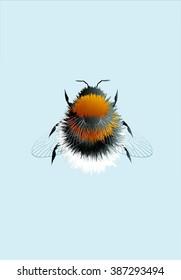 Bumblebee; eps 10
