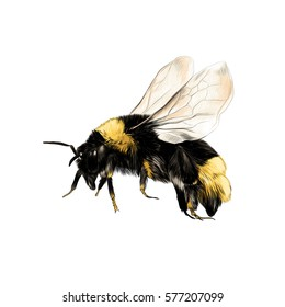 Bee Drawing Images, Stock Photos & Vectors | Shutterstock