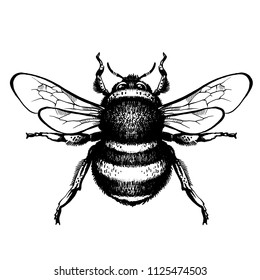 Bumblebee Hand drawn vector illustration. Tattoo art sketch of bee, mystical and esoteric symbols. Drawing of bumblebee - hand sketch of insect, black and white illustration
