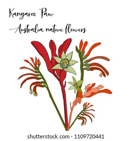 bunch of australia native flower, kangaroo paw flower on white background in vector format