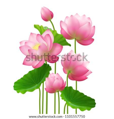 Bunch Beautiful Lotus Flowers Leaves Close Stock Vector Royalty
