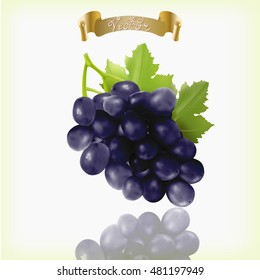 Bunch of blue, purple, black Isabella grapes with vine leaves isolated on white background. Realistic, fresh, natural food, dessert. 3d vector illustration for agriculture design.