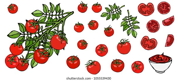 Bunch of Cherry Tomatoes on a Branch With Leaves and Ketchup Bowl. Botanical Gardening Illustration. Ketchup Logo or Vegetable Salad. Realistic Hand Drawn Vector Illustration. Savoyar Doodle Style.