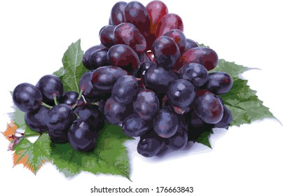 A bunch of dark grapes (vector) on a white background