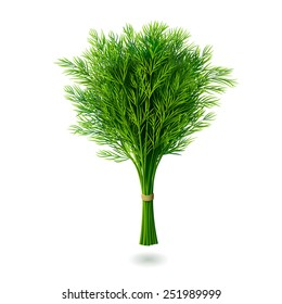 Bunch of fresh dill with shadow isolated on white background. Realistic vector illustration.