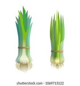 bunch fresh onion and garlic, vector illustration on isolated background