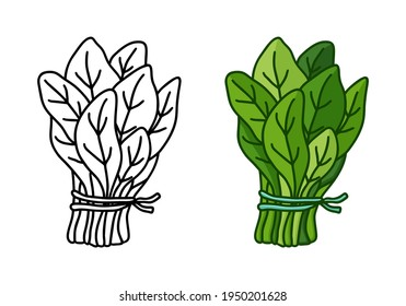 Bunch of fresh spinach doodle icon. Linear and color version. Black simple illustration of green garden plant. Contour isolated vector pictogram on white background