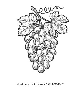 bunch of grapes sketch engraving vector illustration. T-shirt apparel print design. Scratch board imitation. Black and white hand drawn image.
