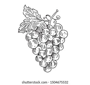 Bunch of grapes. Vector drawing for wine labels, menus and packaging design.