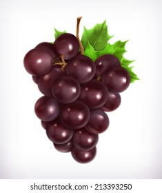 Bunch of grapes, vector illustration
