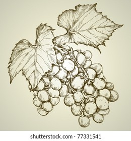bunch of grapevine