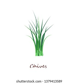 Bunch of green chives. Fresh organic food. Cooking herbs concept. Vector illustration can be used for topics like seasoning, salad ingredient, gardening, horticulture