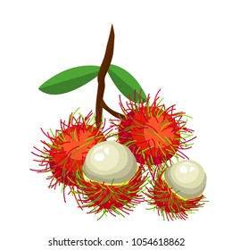 The bunch of rambutans on white background.