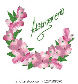 bunch of rose alstroemerias with a handpainted word 'alstroemeria' on white background