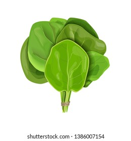 Bunch of Spinach fresh juicy raw leaves close up isolated on white. Healthy diet, vegetarian food, Sheaf
