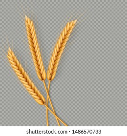 Bunch of wheat ears, dried whole grains realistic illustration frame isolated on transparent background. Bakery object template. Wheat ears wreath. EPS 10