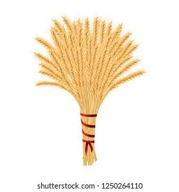 Bunch of wheat. Reap of spiked grain heads. Christmas sheaf. Sheaf of crop ears. Spikes, Julkarve, Julenek, vector illustration.