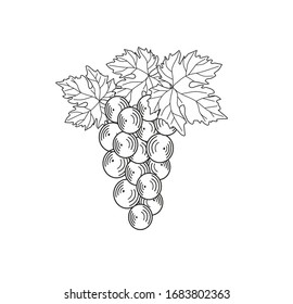 BUNCH WHITE AND BLACK GRAPES SET