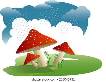 Bunch of wild mushrooms