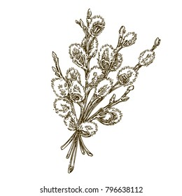 Bunch of willow branches. Vintage. Engraving style. Vector illustration.