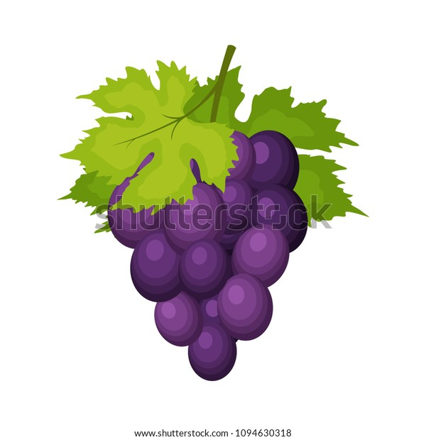 Bunch Wine Grapes Leaves Isolated On Stock Vector Royalty Free