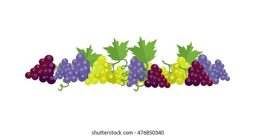 Bunches of red, white and purple wine grapes with green leaves. Fresh fruit. Vineyard grape icon. Grape icon. Wine grape icon. Isolated object in flat design on white background. Vector illustration