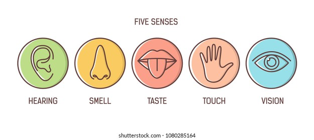 Bundle of 5 senses - hearing, smell, taste, touch, vision. Set of human sensory organs drawn with outlines inside colorful circles. Bright colored vector illustration in modern line art style