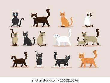 bundle of cats feline animals icons vector illustration design