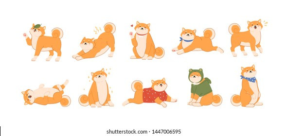 Bundle of cute kawaii dog of Japanese breed isolated on white background. Collection of adorable Shiba Inu or Akita Ken pup playing, barking, stretching, walking. Flat cartoon vector illustration.