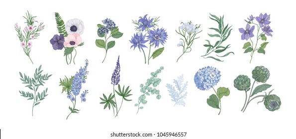 Bundle of detailed drawings of beautiful floristic flowers and decorative herbs isolated on white background. Set of beautiful floral and herbal decorations. Botanical hand drawn vector illustration.
