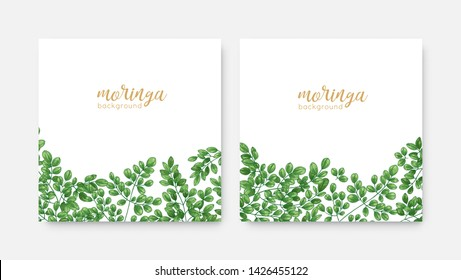 Bundle of elegant square backdrops or labels with green Miracle Tree or Moringa oleifera foliage. Set of natural background templates with exotic herbaceous plant. Realistic vector illustration.