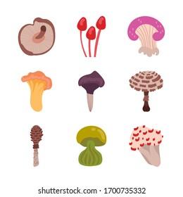 bundle of fungus set icons vector illustration design