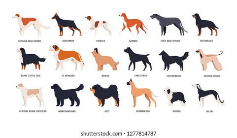Bundle of funny cute dogs of different breeds isolated on white background. Set of purebred pets or domestic animals of various types. Side view. Colored vector illustration in flat cartoon style.