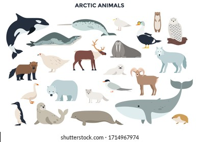 Bundle of funny wild polar animals, marine mammals and birds. Collection of fauna of Arctic. Set of cute cartoon characters isolated on white background. Colorful vector illustration in flat style.