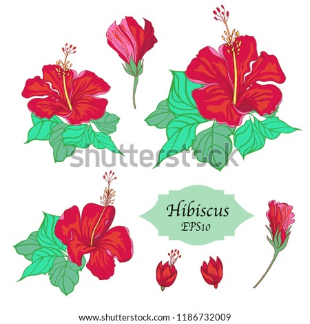 Bundle Hand Drawn Hibiscus Templates Isolated Stock Vector Royalty