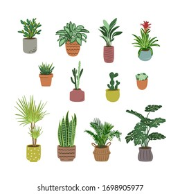 Bundle of house plants isolated on a white background. Decorative indoor plants growing in pots or planters. Color Vector illustration.