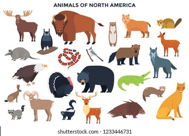 Bundle of wild forest animals and birds or North America. Collection of continent inhabitants. Set of cute cartoon characters isolated on white background. Colorful vector illustration in flat style.