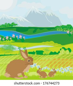 bunnies in green meadow